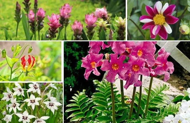 Selezione di 5 bulbi da piantare in primavera