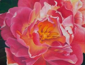 Pink Tulip: Deborah Lhota 2010 (Pastel)