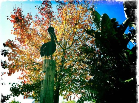 Pelican Sculpture amongst the autumn leaves