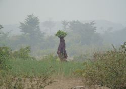 A child carrying leaves