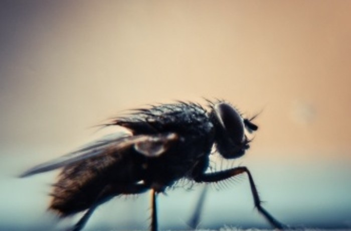 Long sleeves and bug spray: Flies are on the rise this season