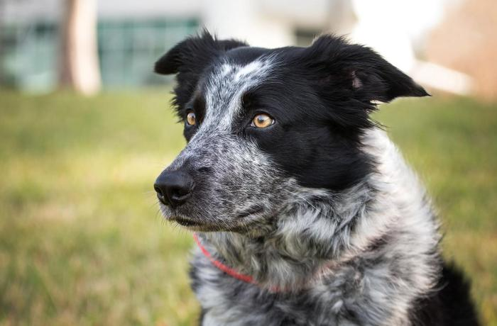 Meet UNF's resident Border Collie