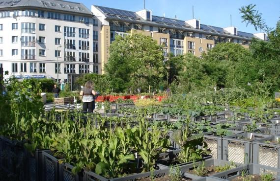 Berlin urban garden