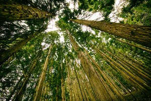For God So Loved theWholeWorld: Confessions of a green, liberal, Christian tree hugger
