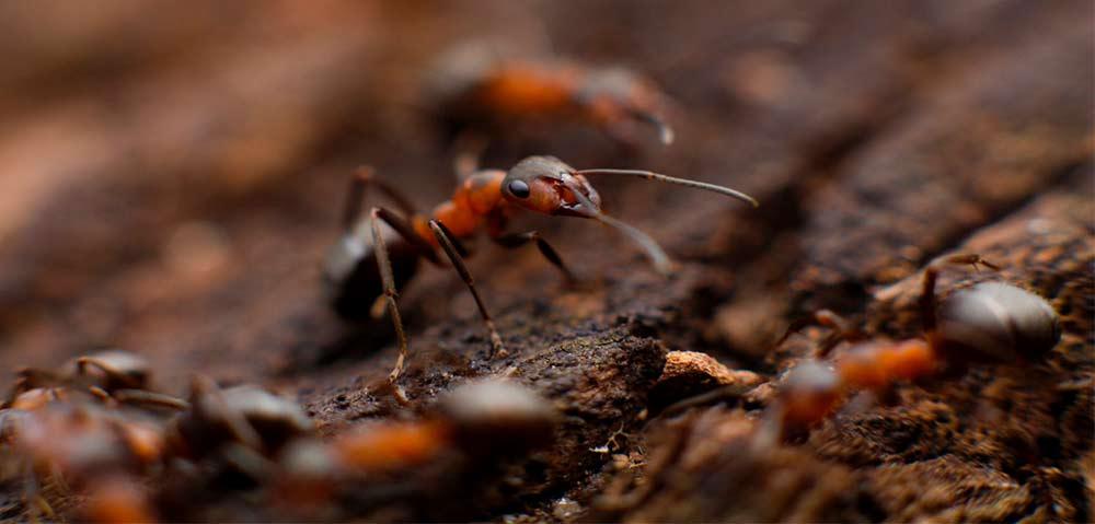 Hausmittel gegen Ameisen I Ameisen mit Hausmittel bekmpfen