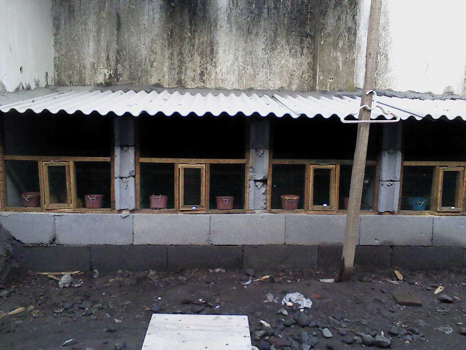 Ayam Hias Lumajang  Jl Kyai Tanjung No 29 Krai