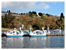 More cute swan boats! :)