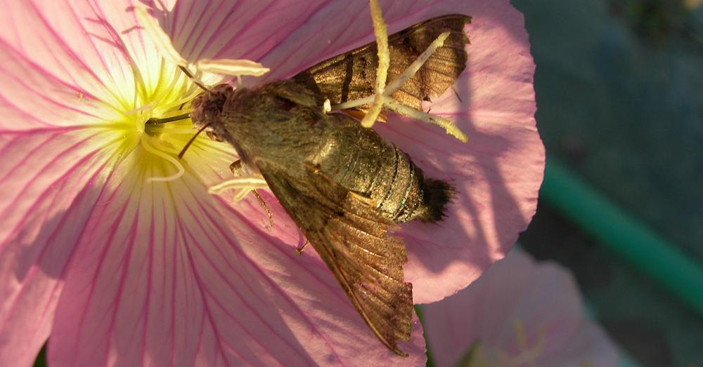Fledermäuse fressen insekten
