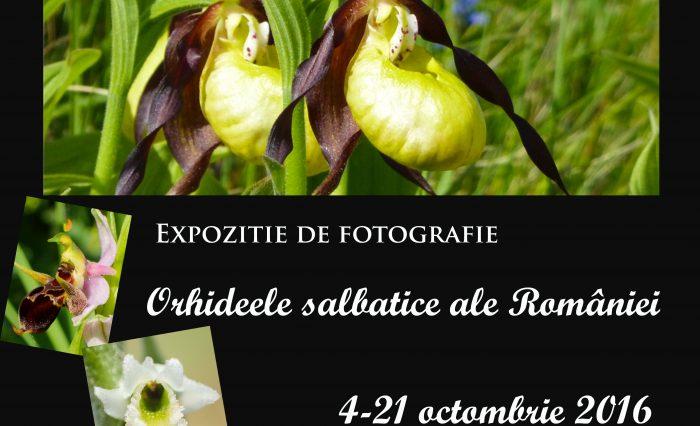 orhideele-salbatice