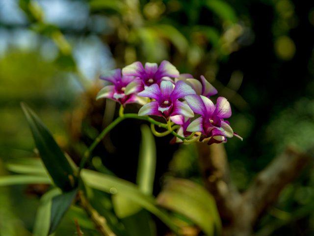 2019.05.29-Gradina-Botanica-100