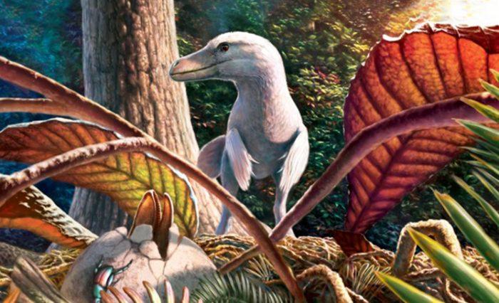 descoperire paleontologica geoparc 2020