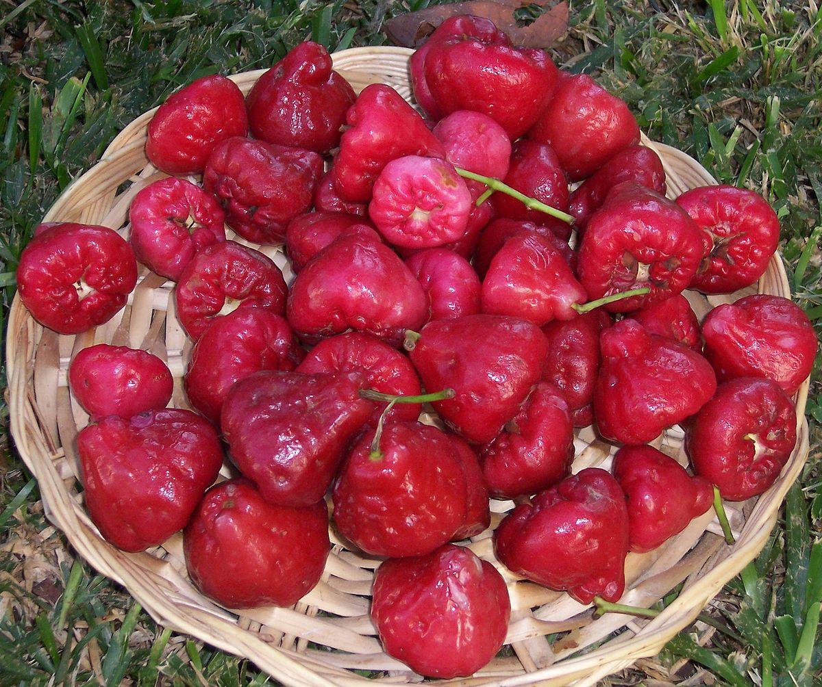 印尼美食攻略—印尼水果推薦懶人包 附水果價格整理,當季水果怎麼挑? – 東南亞投資報告
