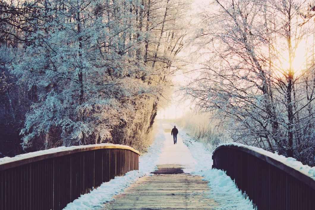alone branches bridge bright