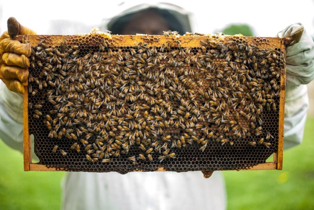 Bee hive held aloft showing their huge community
