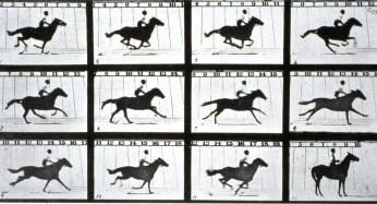 figura 2b - Cavalo em movimento( instant stop)