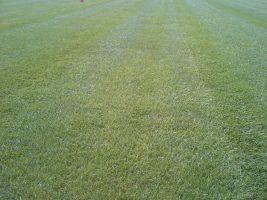Sportvelden gras