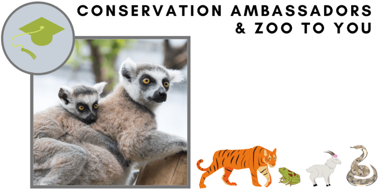 Conservation Ambassadors Zoo to You