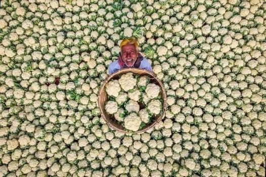 Happy-Cauliflower-Farmer