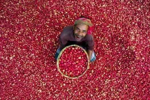Happy-Onion-Farmer
