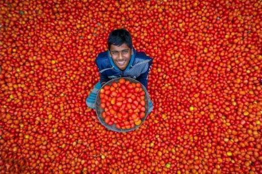 Happy-Tomato-Farmer