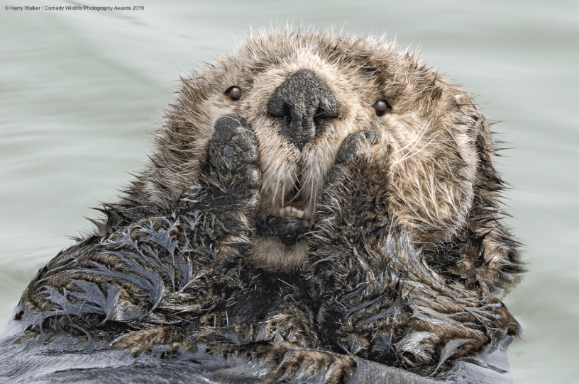 Screenshot_2019-11-20 2019 Winners Comedy Wildlife Photography Awards - Conservation through Competition(2)