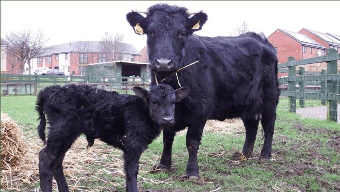 Stonebridge City Farm