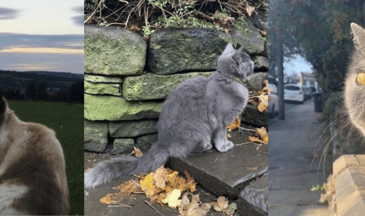 cats of crookes