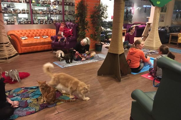20 things to do in Nottingham students - Kitty Cafe