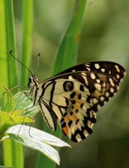 Selamatkan Fauna Indonesia!