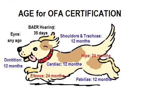 ofa-certification - Union Hill Labradors