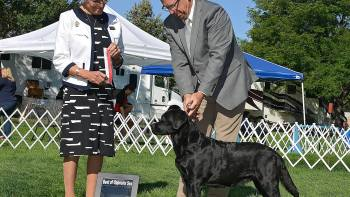 Permalink to: GCH Everso's Little Sure Shot at Union Hill WC, aka Annie