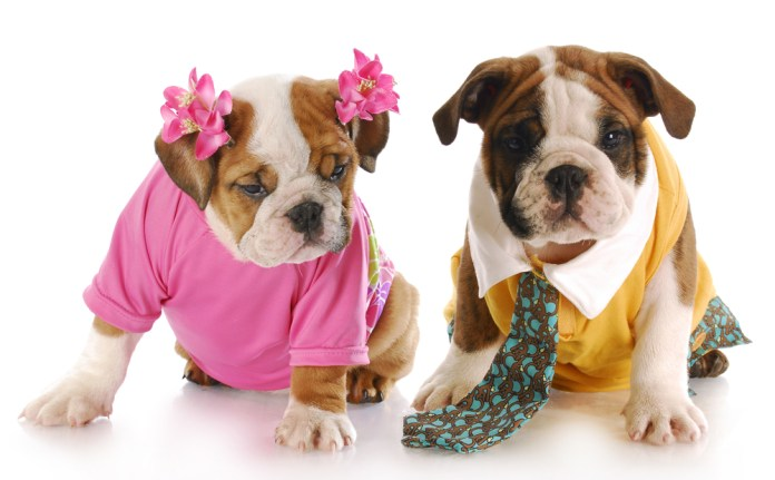 Male vs Female Cats and Dogs - Union Lake Veterinary Hospital
