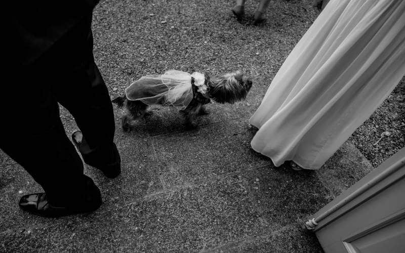 animal domestique dans un mariage