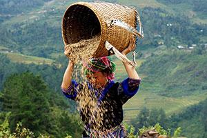 שבטים בווייטנאם