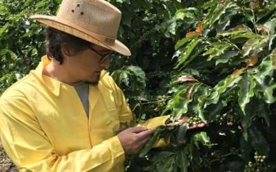 Cinco fazendas de café que fazem visitas guiadas