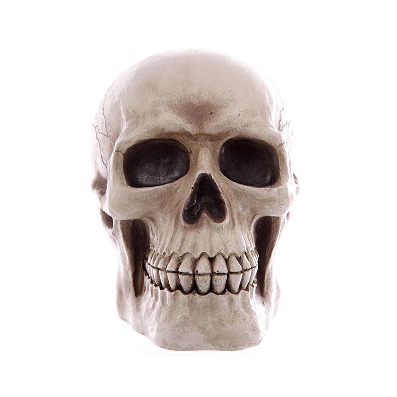 realistic large lifesize human skull money box 02