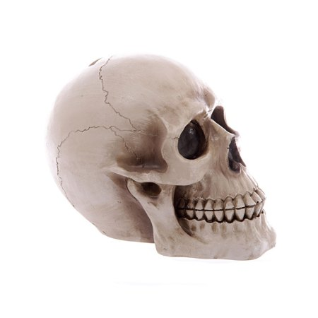 realistic large lifesize human skull money box 04