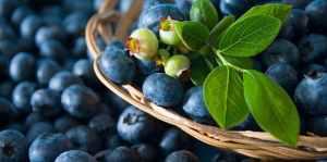 Healthy Blueberries