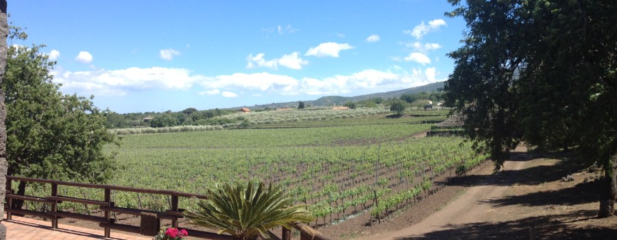 Sicily Wine Tour – Come and Join Us!