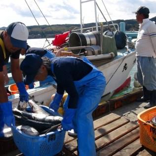 震災支援 漁業支援 (12)