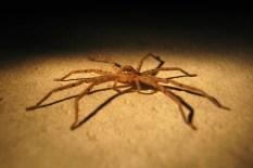 spider-434905_1280
