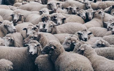 ICO Marketing & Mob Mentality: Using Crowd Psychology Effectively In Your Campaign