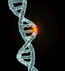 Genetic studies of homosexuality