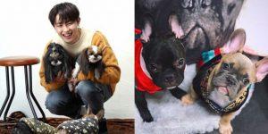 K-Pop. Pets, U-Kwon, Block B,