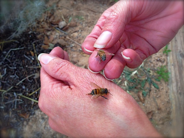 Bees in hand.