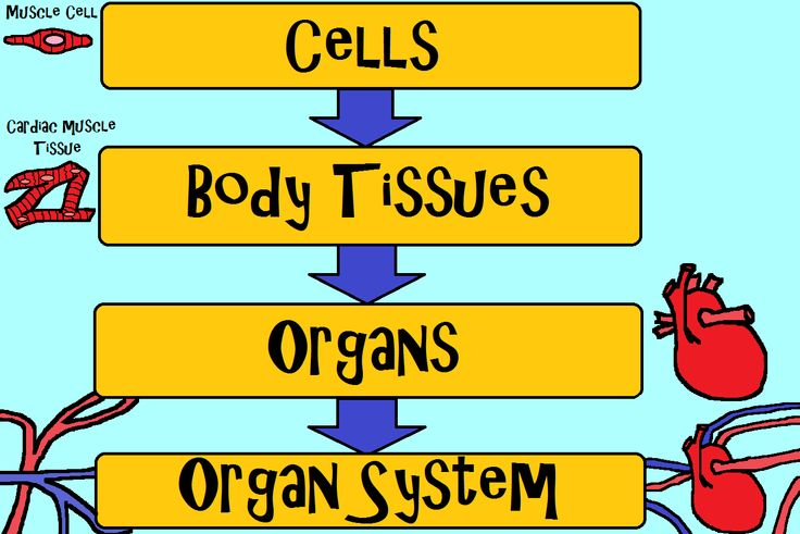 large intestine diagram blank toyota truck wiring diagrams science curriculum