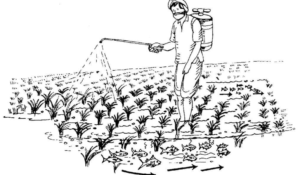 Lawn pesticide ban means cancer prevention