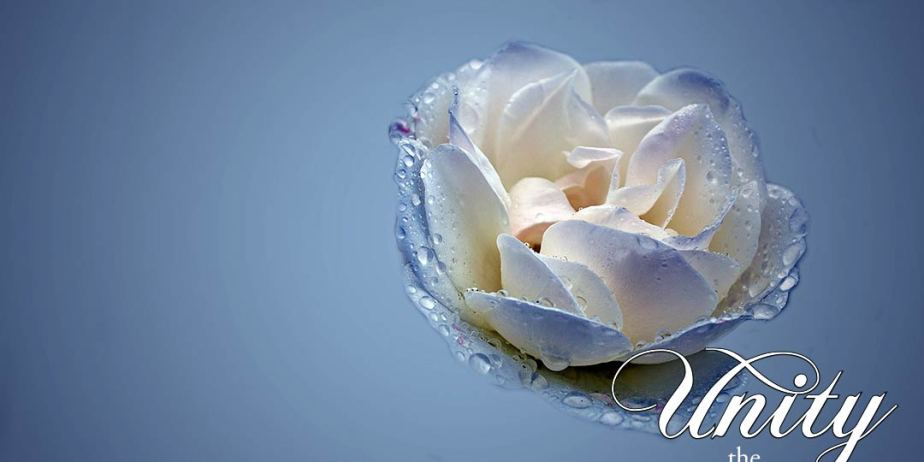 blue-and-white-rose