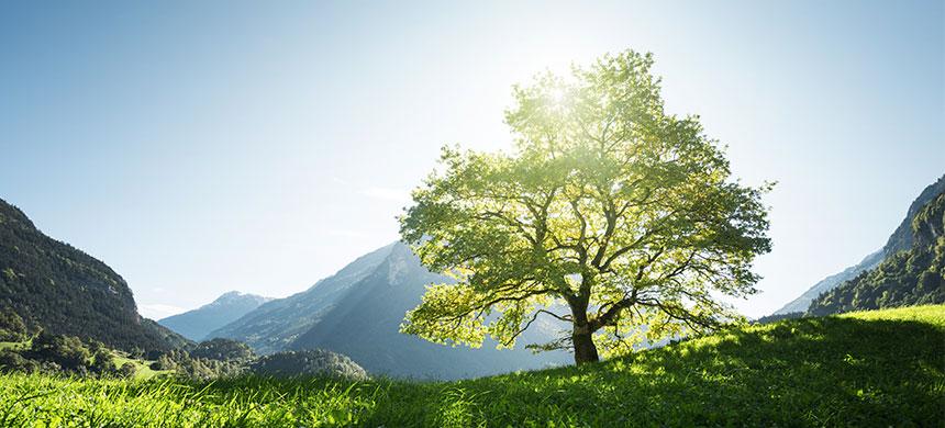 ¿Qué tienen que ver los árboles con usted?