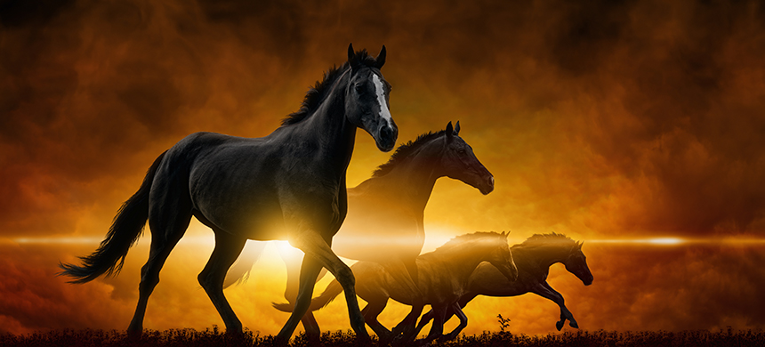 Jinetes del Apocalipsis: el caballo blanco